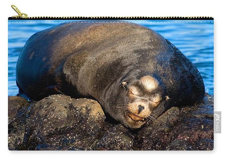 Sea Lion Carry-all Pouch featuring the photograph Snoozing by Randall Ingalls