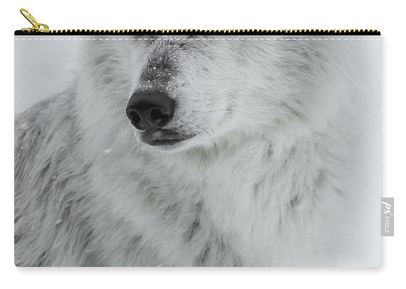Wolf Carry-all Pouch featuring the photograph Snow Dog by Athena Mckinzie