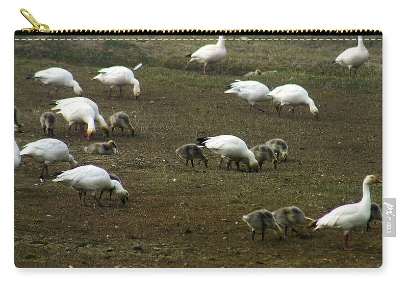 Snow Geese Carry-all Pouch featuring the photograph Snow Geese by Anthony Jones