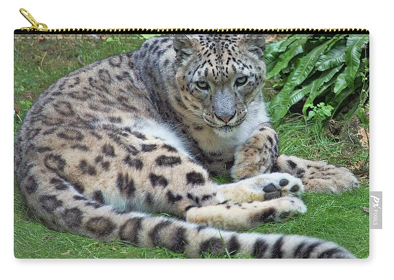 Snow Leopard Carry-all Pouch featuring the photograph Snow Leopard, Doue-la-fontaine Zoo, Loire, France by Curt Rush