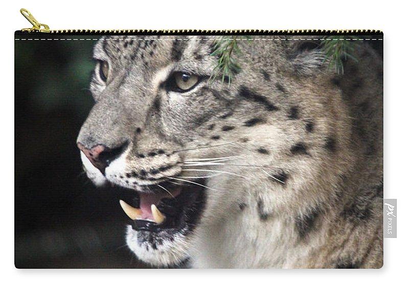 Snow Leopard Carry-all Pouch featuring the photograph Snow Leopard Portrait by Athena Mckinzie