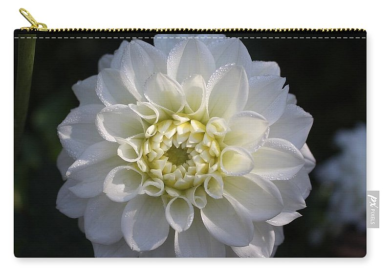 Dahlias Carry-all Pouch featuring the photograph Snowball Dahlia 2 by Jane Powell