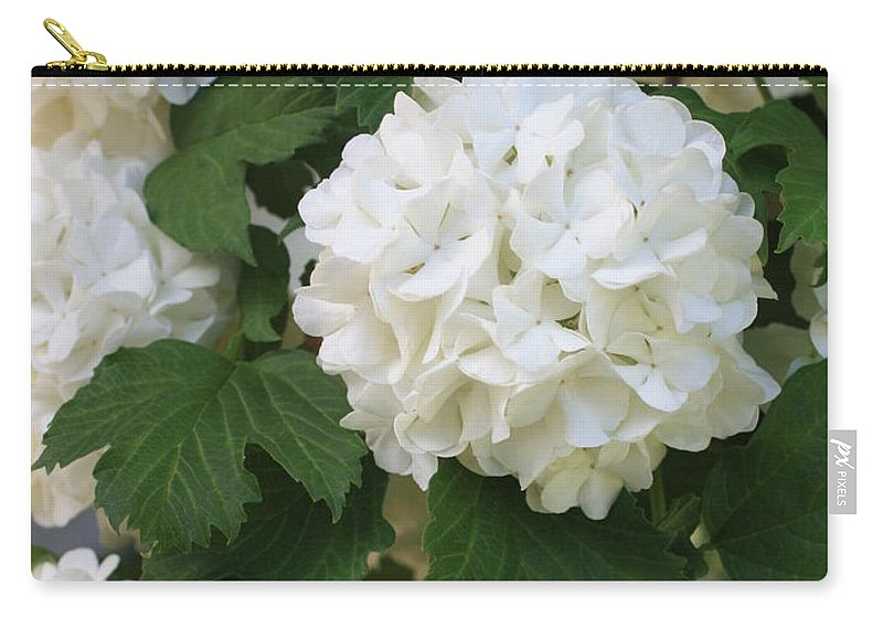 Snowball Tree Carry-all Pouch featuring the photograph Snowball Tree With Delicate Leaves by Carol Groenen