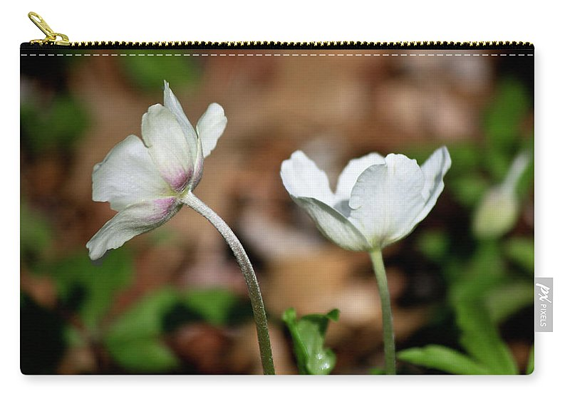 Snowdrop Carry-all Pouch featuring the photograph Snowdrop Anemones by Teresa Mucha