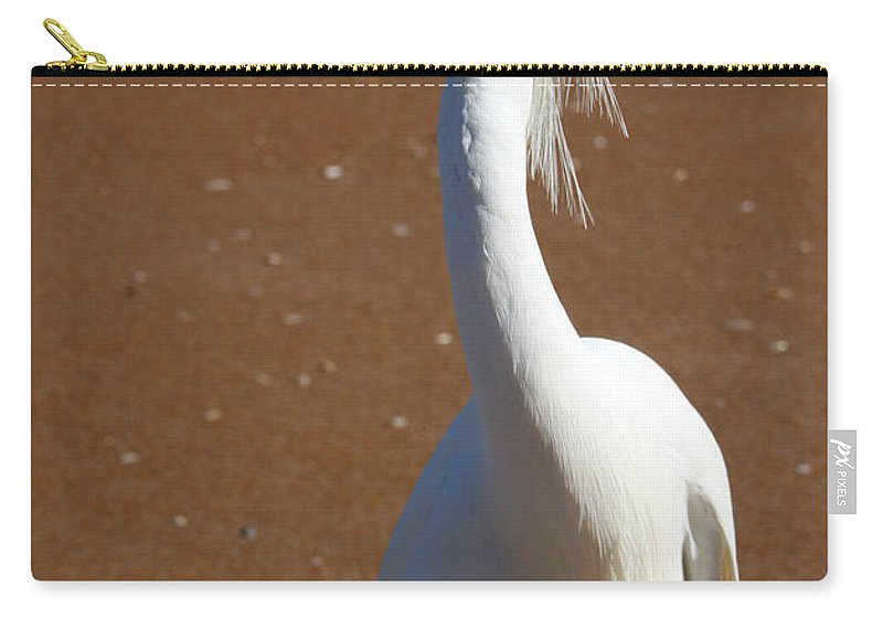 Bird Beach Sand White Bright Yellow Curious Egret Long Neck Feather Eye Ocean Carry-all Pouch featuring the photograph Snowy Egret by Andrei Shliakhau