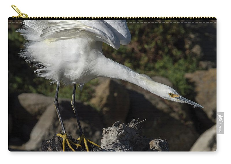 Birds Carry-all Pouch featuring the photograph Snowy Egret Stretch by Bruce Frye