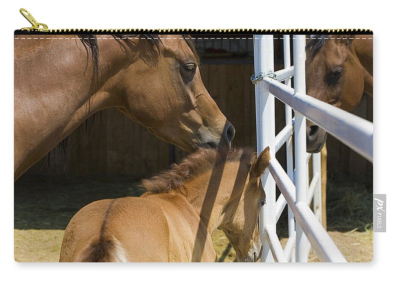 Mother Carry-all Pouch featuring the photograph Socializing Amongst Horses by Marilyn Hunt