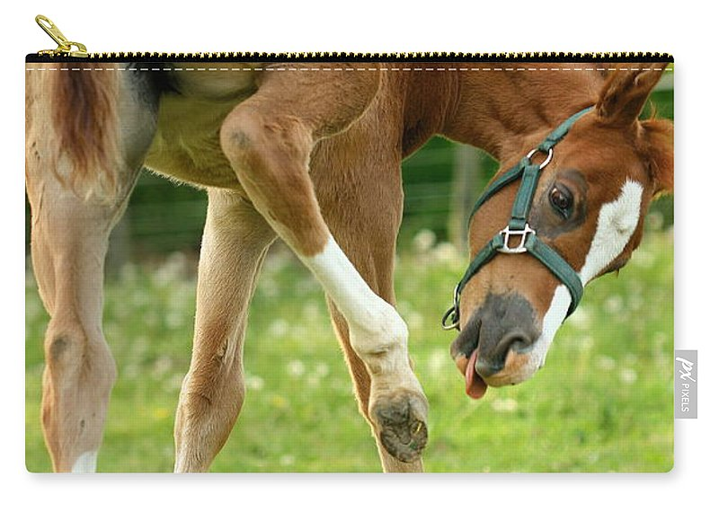Horse Carry-all Pouch featuring the photograph So....close.... by Angela Rath