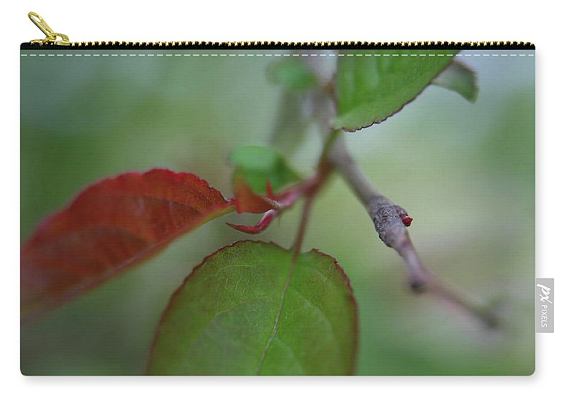 Branch Carry-all Pouch featuring the photograph Soft Branch by Karol Livote