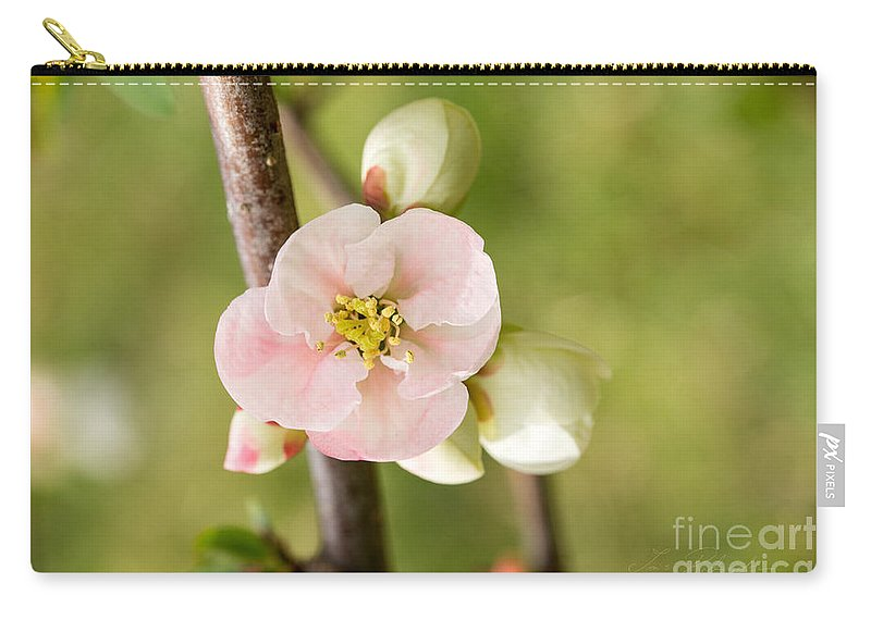 Quince Carry-all Pouch featuring the photograph Pink Quince Blossom by Iris Richardson