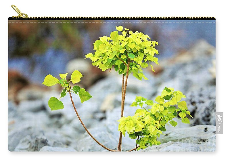 Landscape Carry-all Pouch featuring the photograph Solo by Jeff Downs
