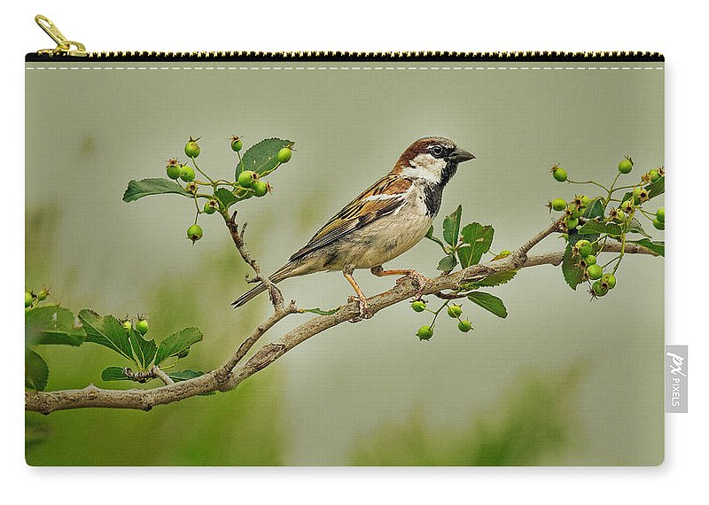 Wildlife Photography Carry-all Pouch featuring the photograph Song Sparrow by John Bartelt