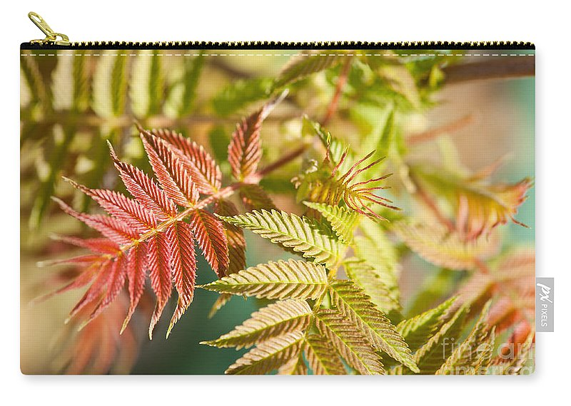 Sorbaria Sorbifolia Carry-all Pouch featuring the photograph Sorbaria Sorbifolia Spring Foliage by Arletta Cwalina