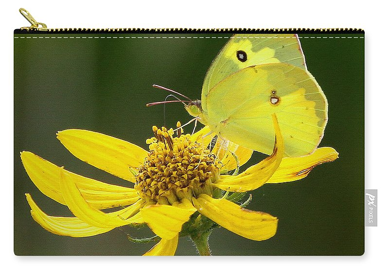 Southern Dogface Butterfly Carry-all Pouch featuring the photograph Southern Dogface Butterfly by Barbara Bowen