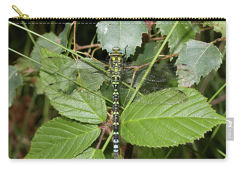 Dragonfly Carry-all Pouch featuring the photograph Southern Hawker by Bob Kemp