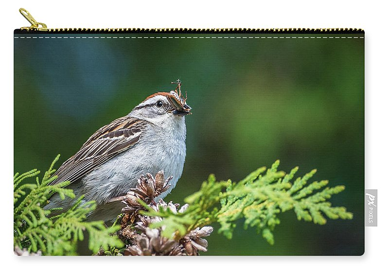 Sparrow With Lunch Carry-all Pouch featuring the photograph Sparrow With Lunch by Paul Freidlund