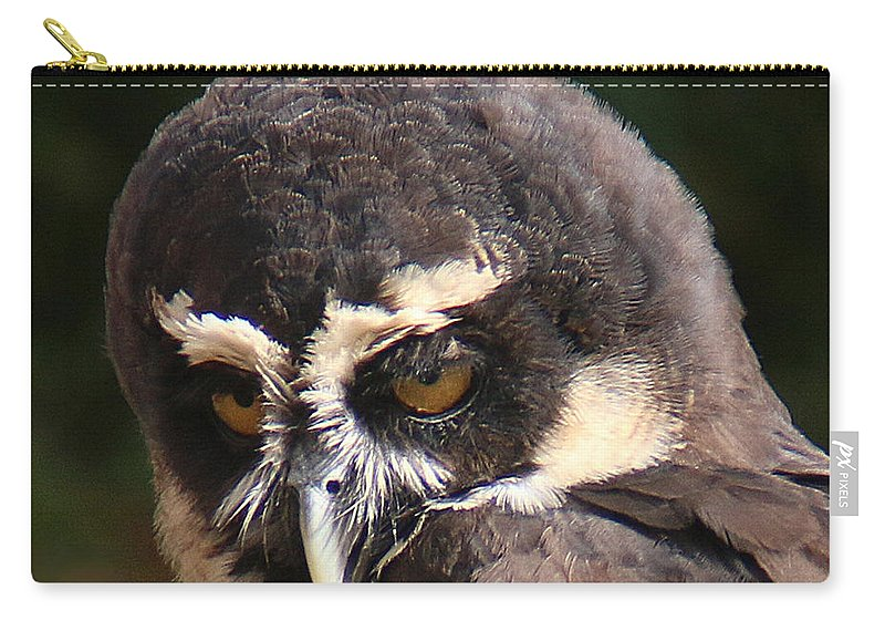 Wildlife Carry-all Pouch featuring the photograph Spectacled Owl Portrait 2 by William Selander