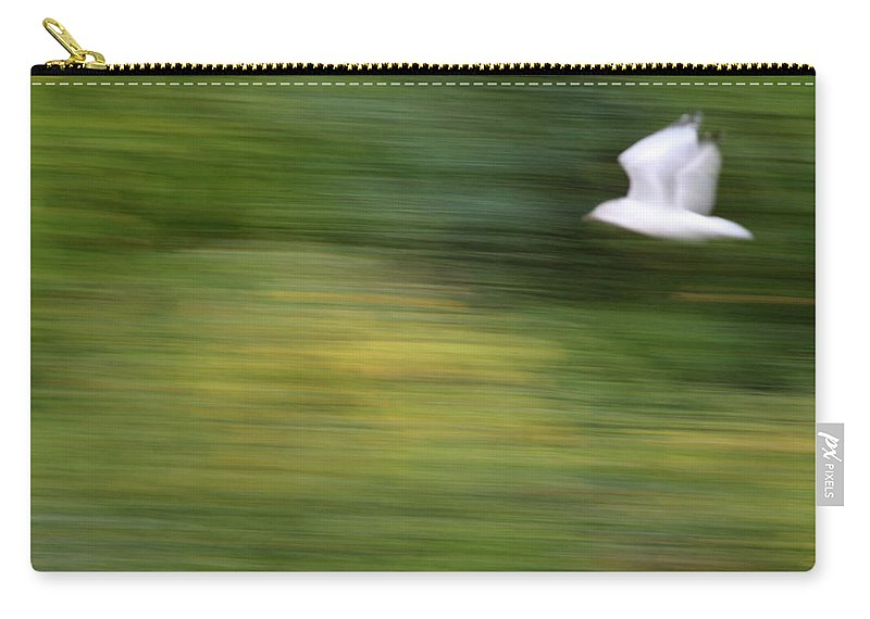 Seagull Carry-all Pouch featuring the photograph Speed In Flight by Karol Livote