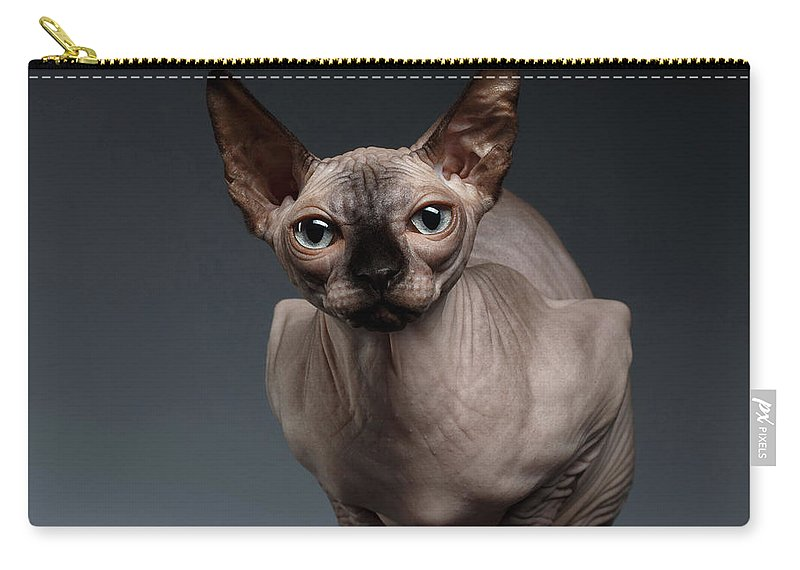Sitting Carry-all Pouch featuring the photograph Sphynx Cat Sits In Front View On Black by Sergey Taran