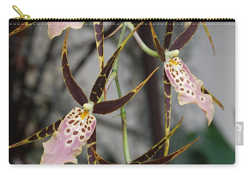 Pink Carry-all Pouch featuring the photograph Spider Orchids by Rob Hans