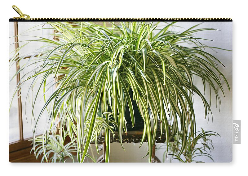 Spider Plant Carry-all Pouch featuring the photograph Spider Plant by Marilyn Hunt