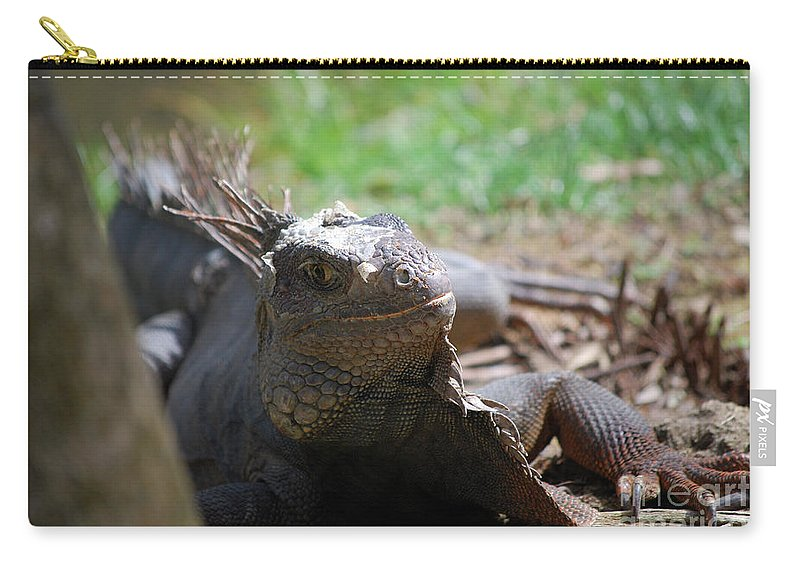 Iguana Carry-all Pouch featuring the photograph Spines Along The Back Of An Iguana In The Tropics by DejaVu Designs