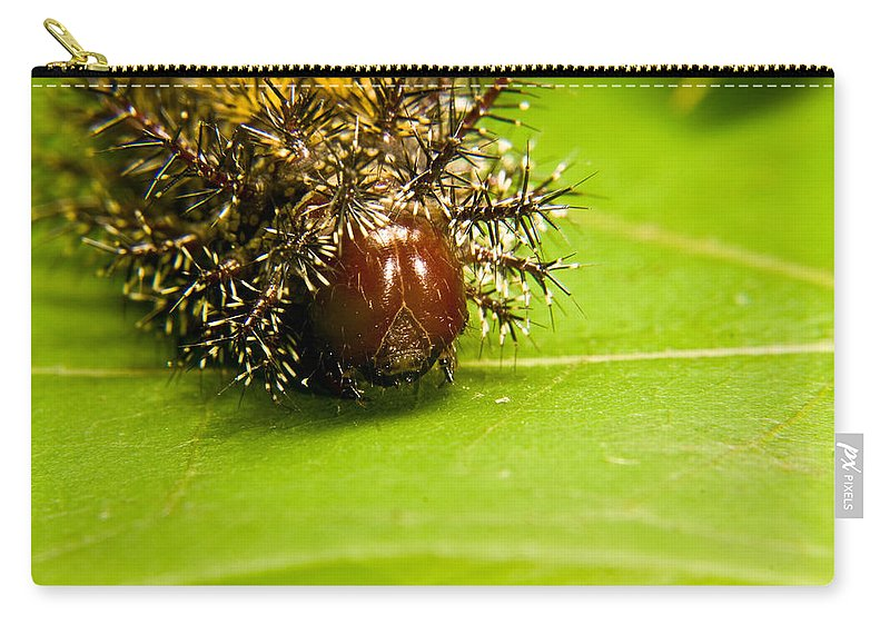 Spiny Carry-all Pouch featuring the photograph Spiny Larvae by Douglas Barnett