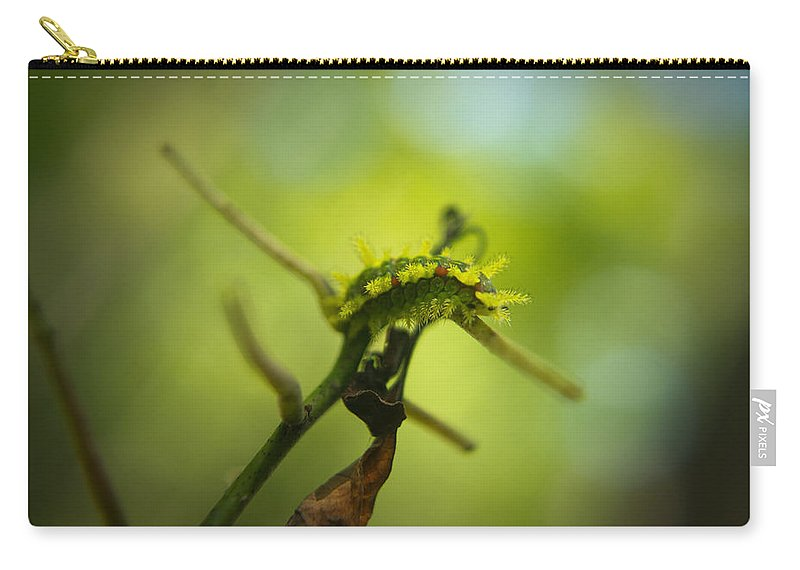 Cove Carry-all Pouch featuring the photograph Spiny Oak Slug Moth 2 by Douglas Barnett