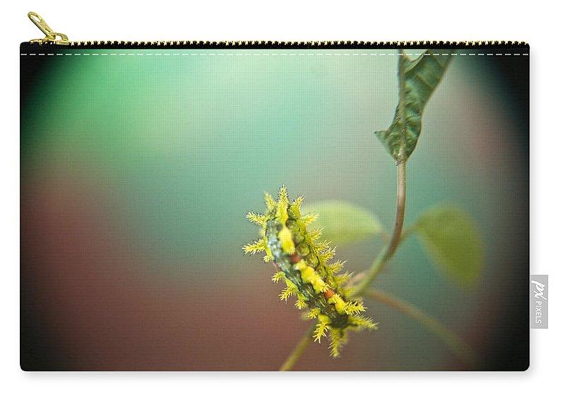 Cove Carry-all Pouch featuring the photograph Spiny Oak Slug Moth 7 by Douglas Barnett
