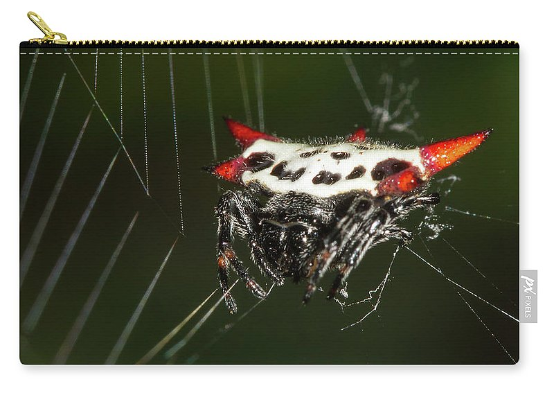 Spiny Orb Weaver Carry-all Pouch featuring the photograph Spiny Orb Weaver by Paul Rebmann