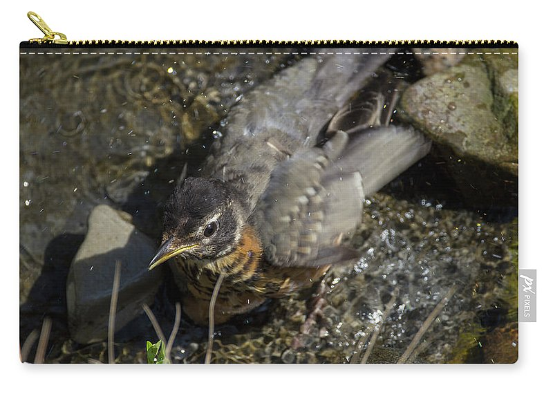 Bird Carry-all Pouch featuring the photograph Splish Splash I Was Taking A Bath - American Robin by Spencer Bush