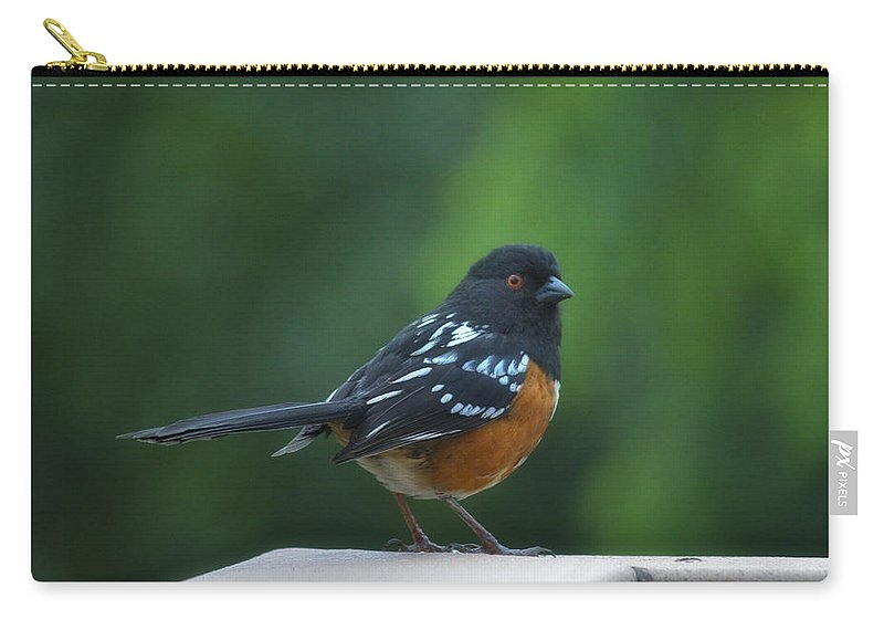 Bird Carry-all Pouch featuring the photograph Spotted Towhee by Linda Dunn