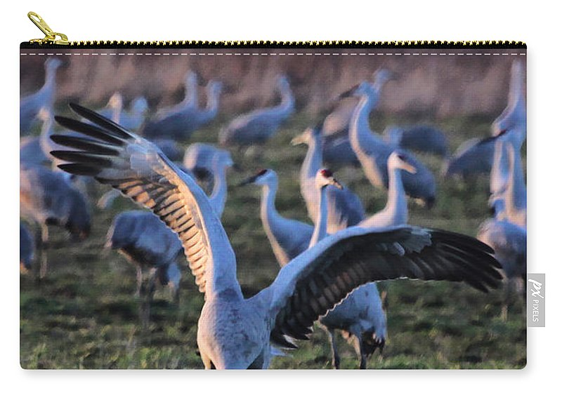 Digital Art Photography Photograph Sandhill Sandhills Sandhill Crane Bird Wings Dusk Socializing Carry-all Pouch featuring the photograph Spread Your Wings by Shari Jardina
