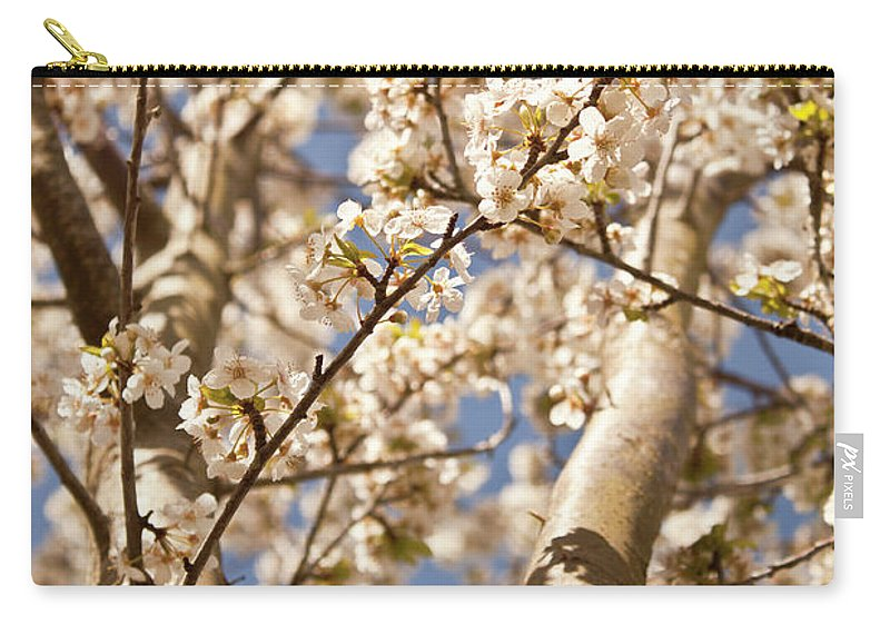 Flowers Carry-all Pouch featuring the photograph Spring Blooms by Danielle Silveira