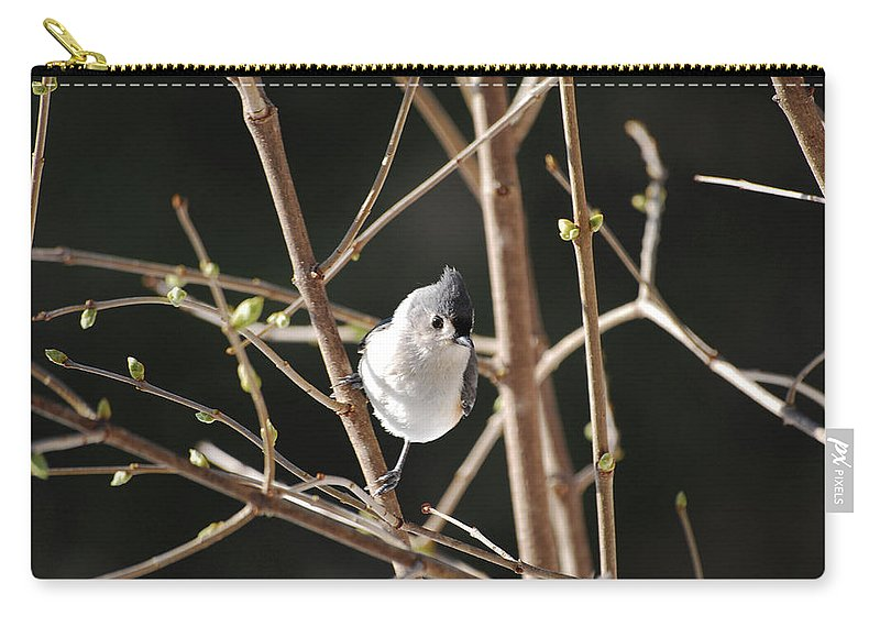 Titmouse Carry-all Pouch featuring the photograph Spring Is On The Way by Lori Tambakis