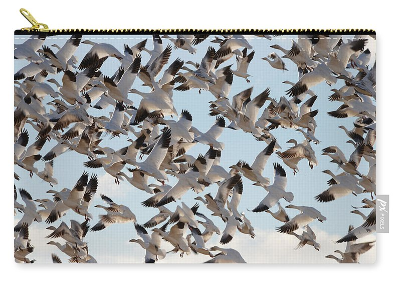 Snow Geese Carry-all Pouch featuring the photograph Spring Snows by Whispering Peaks Photography