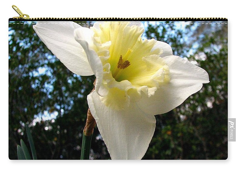 Daffodil Carry-all Pouch featuring the photograph Spring's First Daffodil 3 by J M Farris Photography