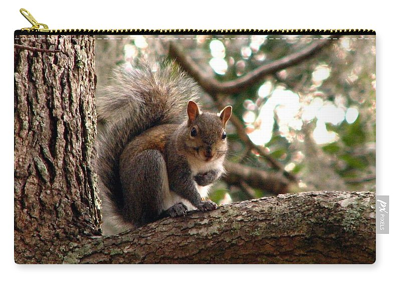 Squirrel Carry-all Pouch featuring the photograph Squirrel 8 by J M Farris Photography