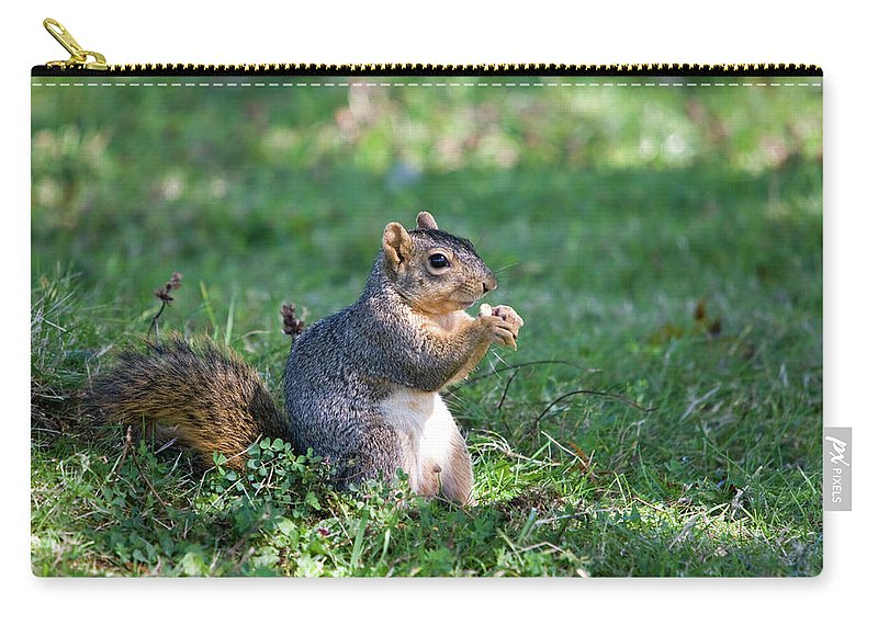 Animal Carry-all Pouch featuring the photograph Squirrel Eating A Nut - Eugene Oregon by Randall Ingalls
