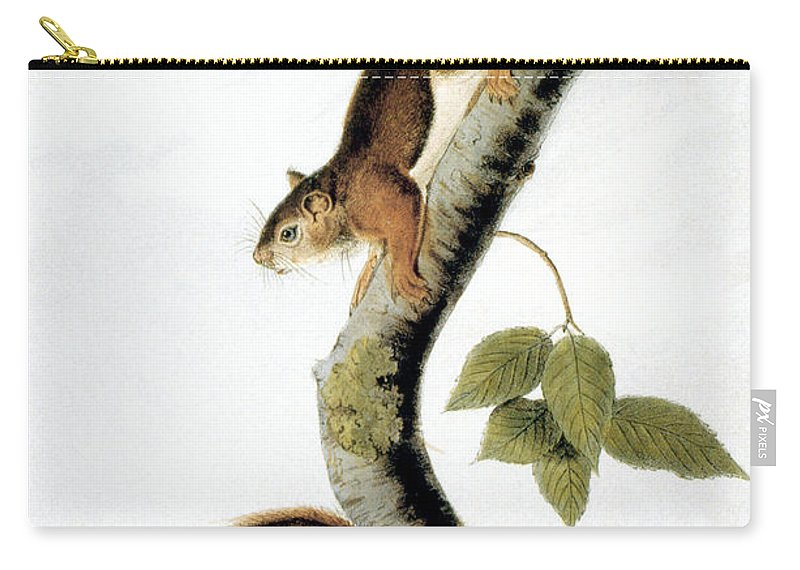 1846 Carry-all Pouch featuring the photograph Squirrel by Granger
