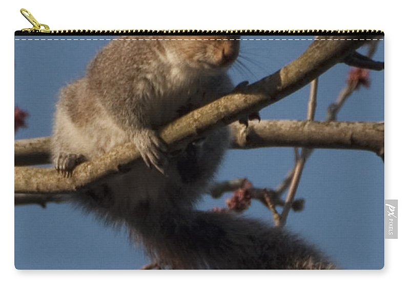 Squirrel Carry-all Pouch featuring the photograph Squirrel by Steven Natanson