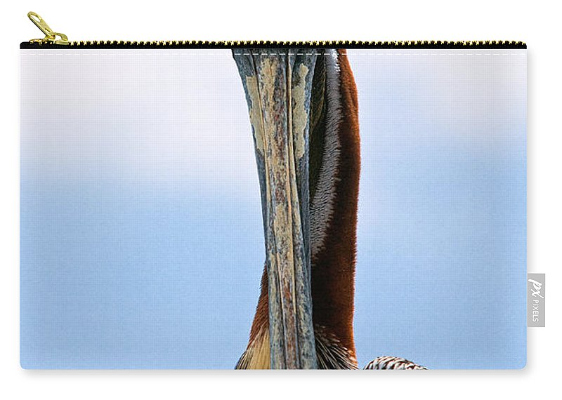 Pelican Carry-all Pouch featuring the photograph Stare Down by Christopher Holmes