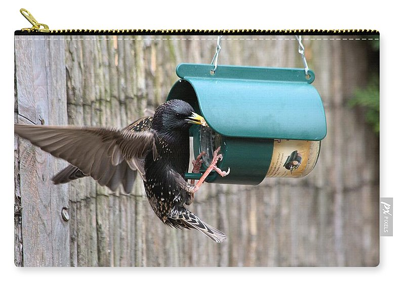 Starling On Bird Feeder Carry-all Pouch featuring the photograph Starling On Bird Feeder by Gordon Auld