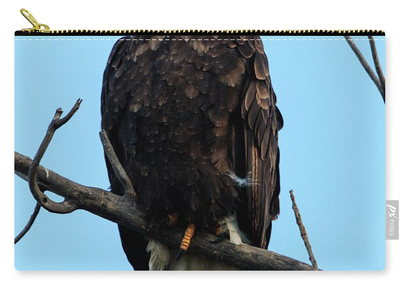 Eagles Carry-all Pouch featuring the photograph Stately Eagle by Terri Morris