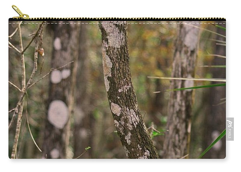Six Mile Cypress Slough Carry-all Pouch featuring the photograph Steadfast Legend by Michiale Schneider