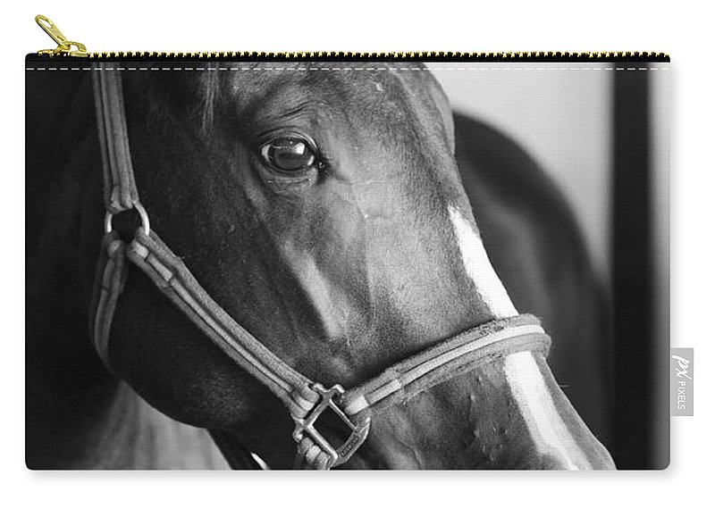 Horse Carry-all Pouch featuring the photograph Horse And Stillness by Marilyn Hunt