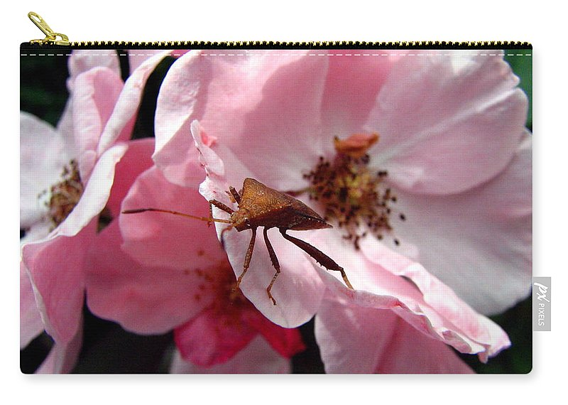 Stink Bug Carry-all Pouch featuring the photograph Stink Bug by J M Farris Photography