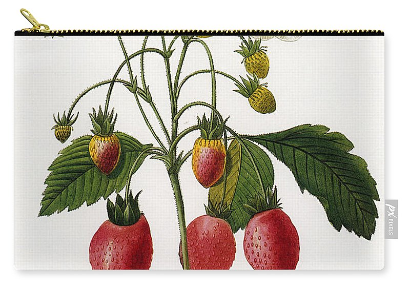 1833 Carry-all Pouch featuring the photograph Strawberry by Granger
