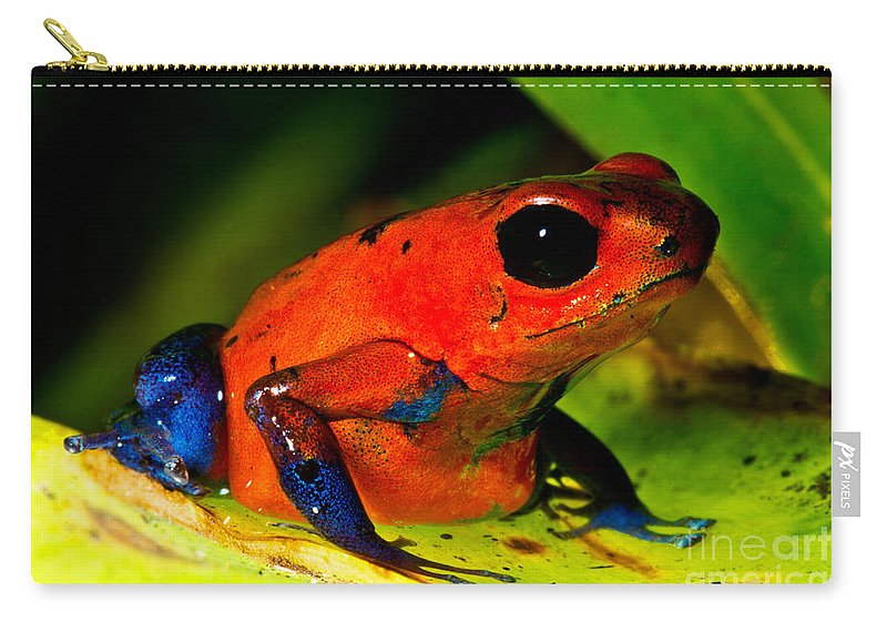 Strawberry Poison Frog Carry-all Pouch featuring the photograph Strawberry Poison Dart Frog by Dant� Fenolio