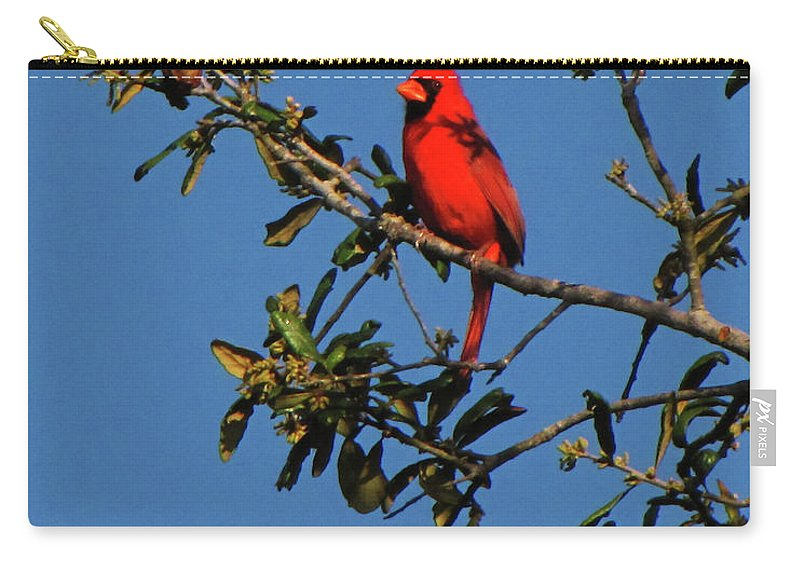 Nature Carry-all Pouch featuring the photograph Striking by Peg Urban